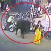 бык напал на женщину