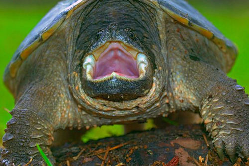щенка скормили черепахе