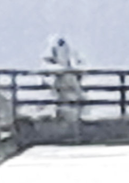 фото таинственного астронавта