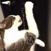 кошка пьёт из кулера
