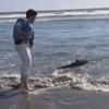 люди спасли дельфина
