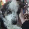 собака призналась в любви