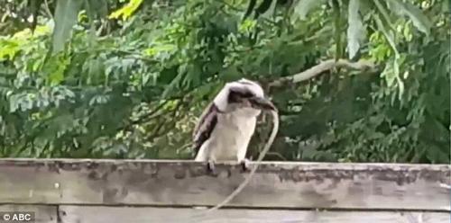 птичка расправилась со змеёй