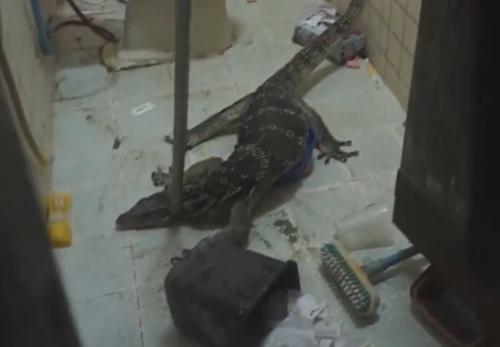 ящерица пробралась в ванную