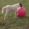 жеребёнок с мячом для йоги