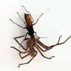 охота осы похожа на фантастику