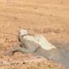 корова провалилась в грязь