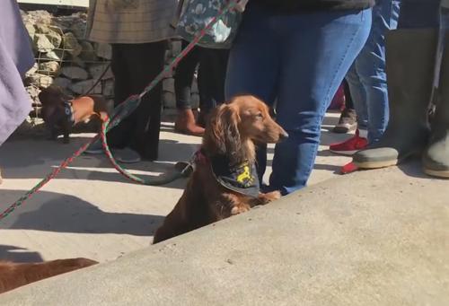 колбасные собаки на прогулке