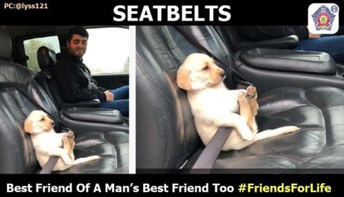 щенок напоминает о безопасности