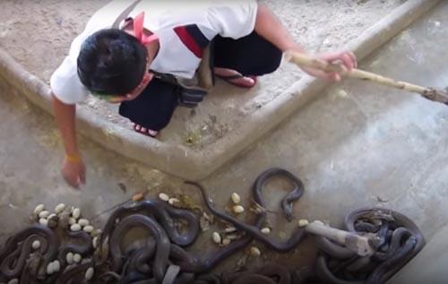 уборщик в окружении змей