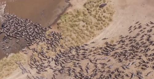 стада животных на марсе