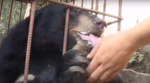 щенок оказался медведем