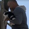кошку сняли со столба
