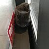 кот между автоматическими дверями