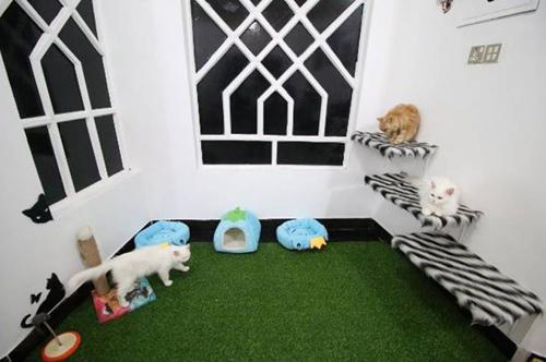 райский отель для кошек