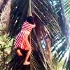 девочка взбирается на пальму