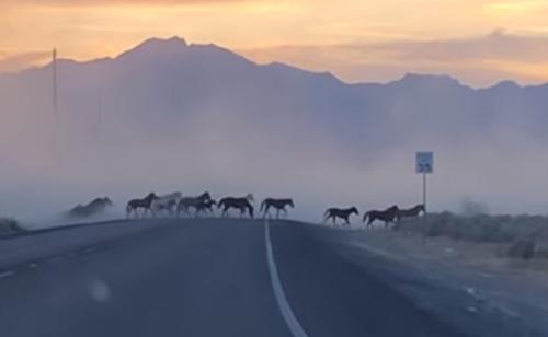 лошади напылили на дороге