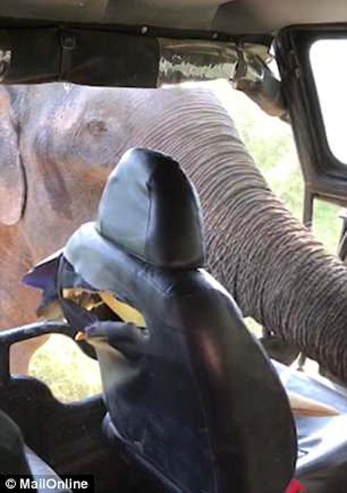 голодный слон вызвал панику