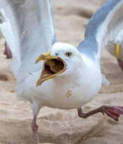 чайки устроили беспорядок в отеле