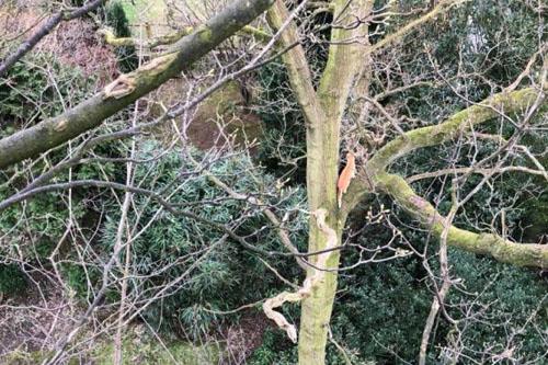кота дважды спасли с дерева