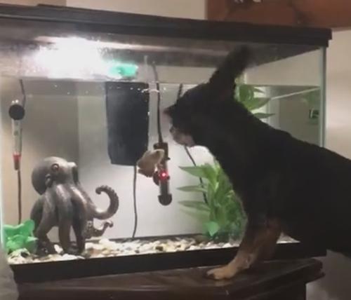 пёс охотится на рыбу