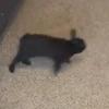 кролик и пёс играют в догонялки