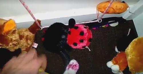 змея среди мягких игрушек