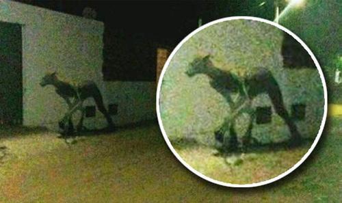 загадочное существо загрызло собак