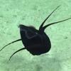 неопознанный кальмар под водой