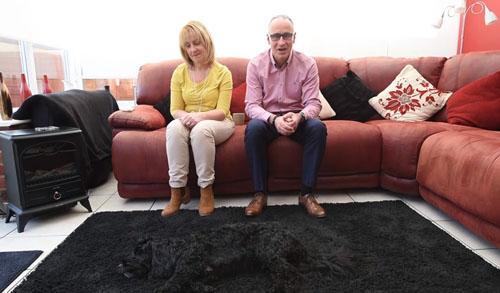 собака прячется на ковре
