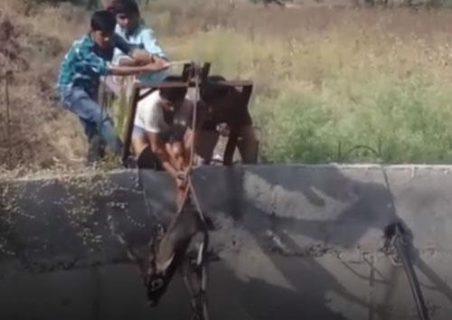 селяне помогли антилопе