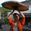 крупный гриб бессмертия