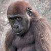 непристойное шоу в зоопарке