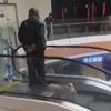 ленивый способ выгуливать собаку