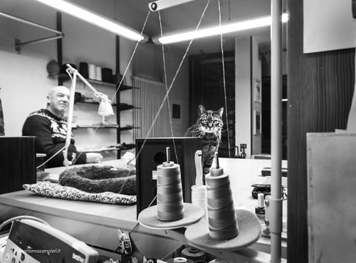 кошки на рабочем месте