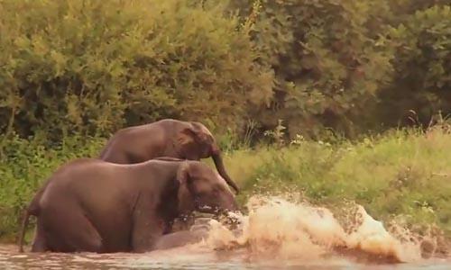 слон упал на берегу реки