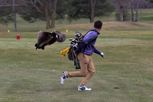 опасная игра в гольф