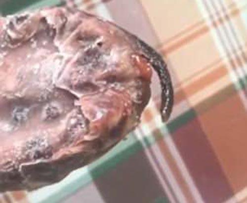 крысиный хвостик в эскимо