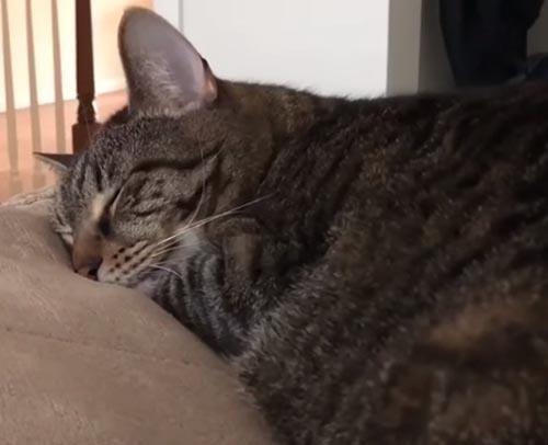 дневной сон кота прервали