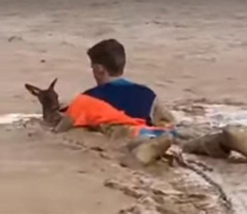 спасение кенгуру из грязи