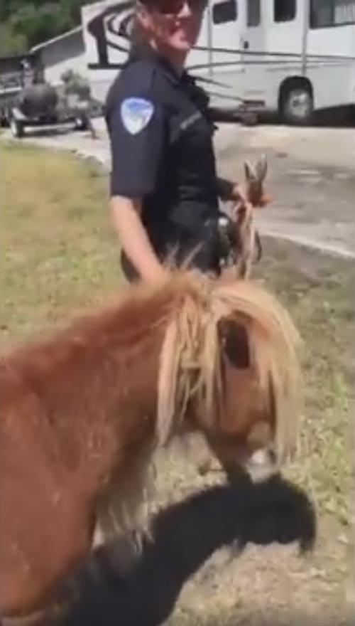 сбежавший пони вернулся домой