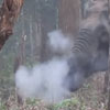 курящий слон