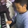 попугай любит фортепиано