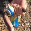 змея неудачно попила из банки