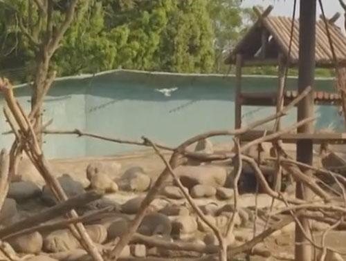 обезьяны сбили беспилотник