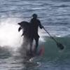 дельфин уронил мужчину в воду