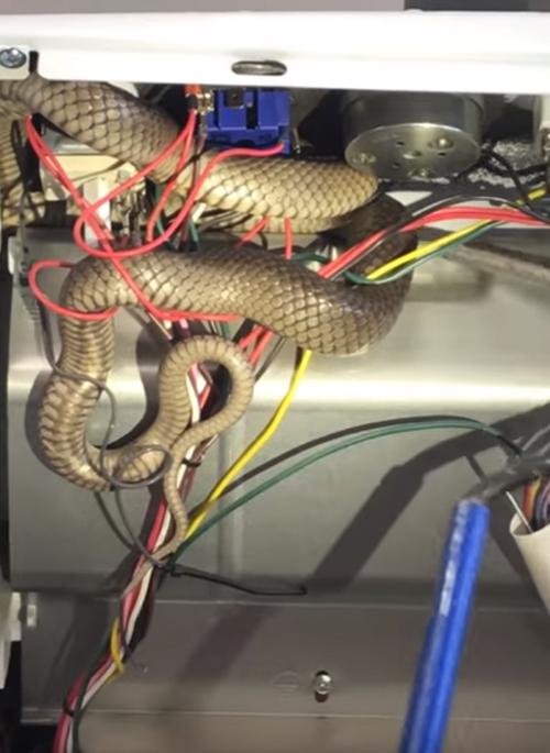 змея в опасной ловушке