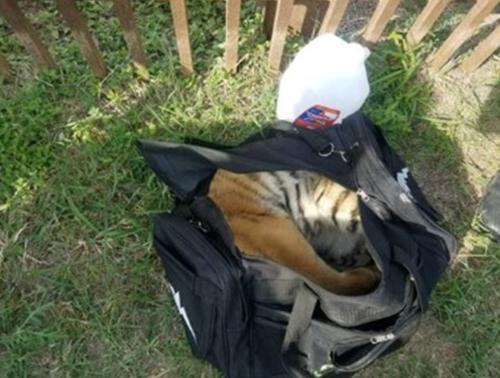 сюрприз в багаже контрабандистов