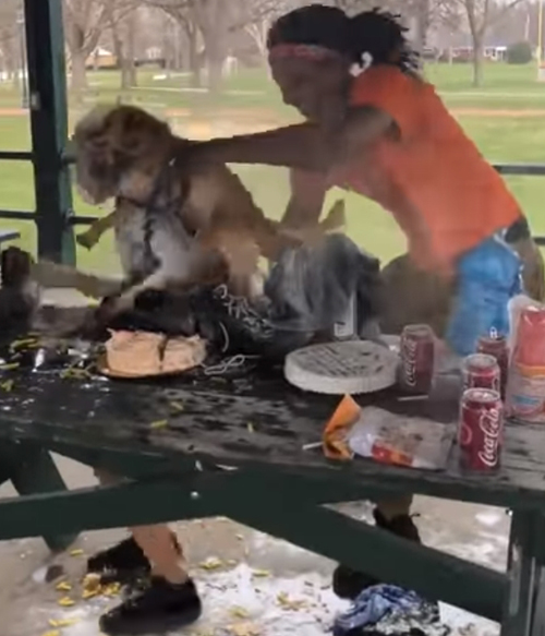 слишком весёлые гости
