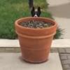 пёс за цветочным горшком